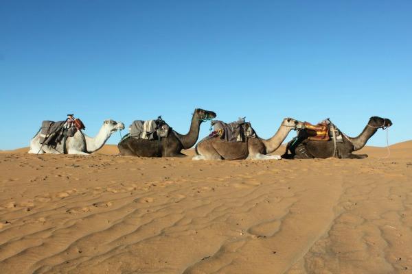 Sahara relato