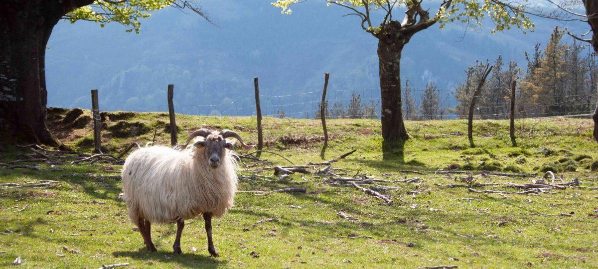Aia, país vasco